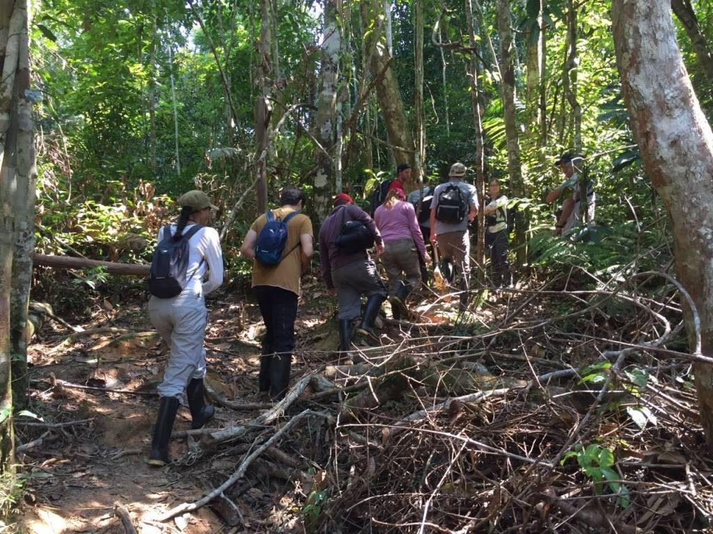 Jungle, Amazonie, Cuyabeno, lodge, marche, arbres, plantes,