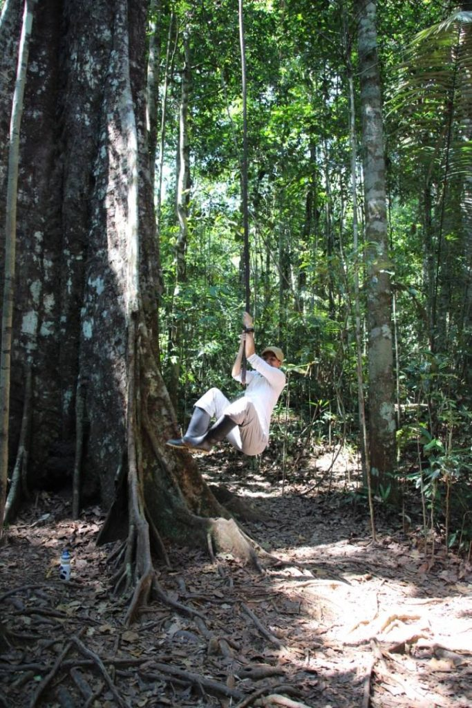 Liane, arbres, forêt, Amazonie,