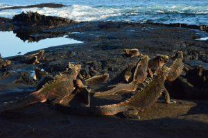 Darwin et ses Galapagos 1