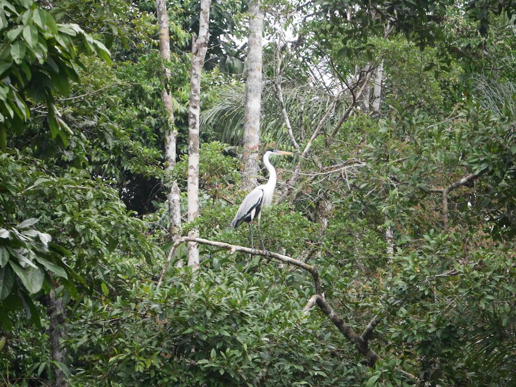 Immersion en Amazonie - de l'Équateur au Pérou 6