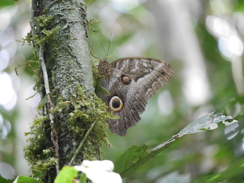 Immersion en Amazonie - de l'Équateur au Pérou 7