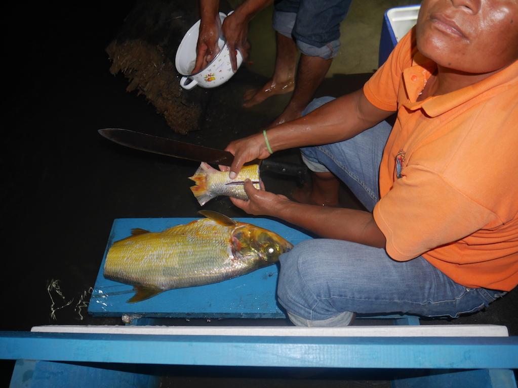 poisson-amazonie