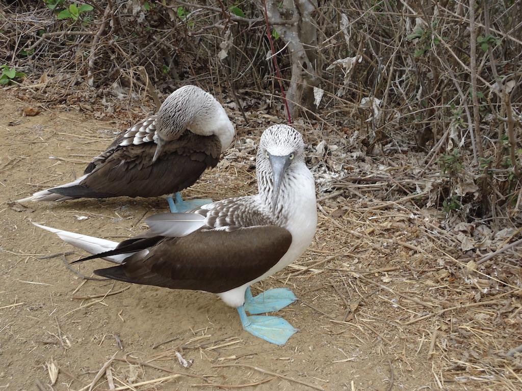animaux-equateur-pacifique