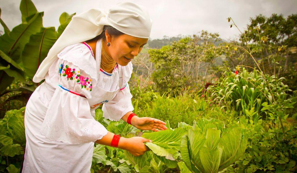 Le potage et herbier de la famille: une source intarissable de connaissances botaniques ancestrales