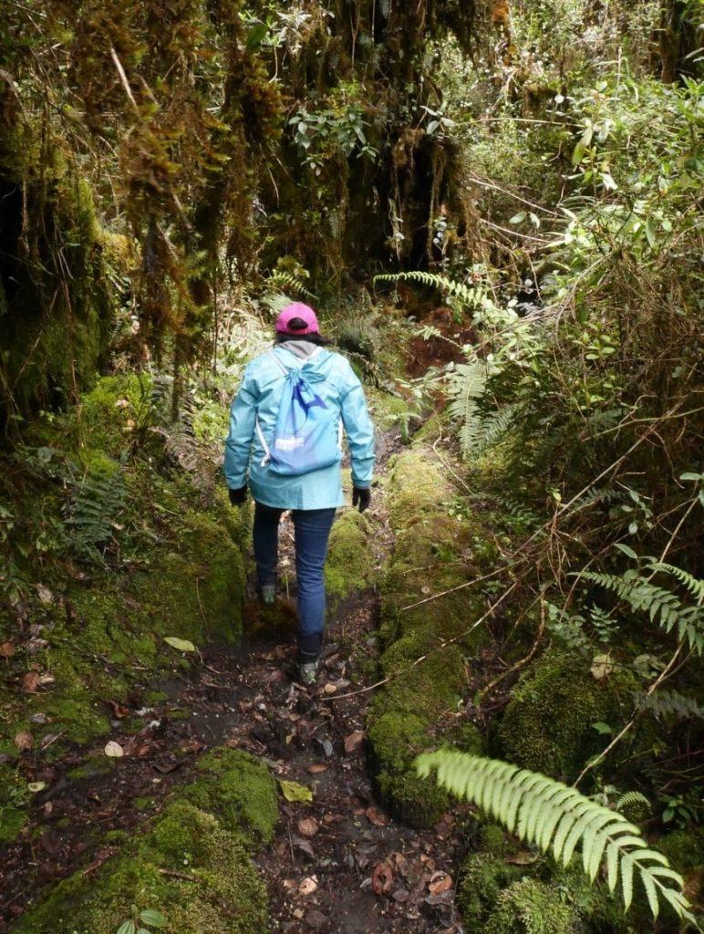 Les passages dans la forêt tropicale sont abordables bien que plus glissants et demandant plus de précaution