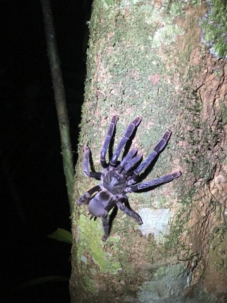 Jungle, observation, insectes, nuit, Amazonie