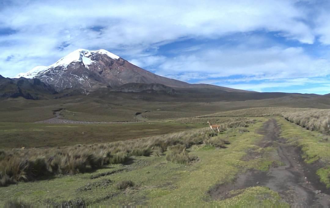 Trek des vigognes au pied du Chimborazo 1