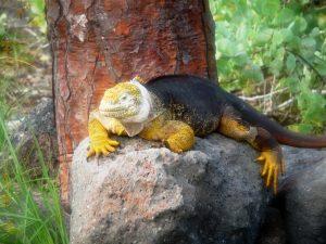 Darwin et ses Galapagos 2