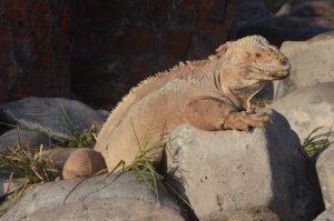 Darwin et ses Galapagos 3