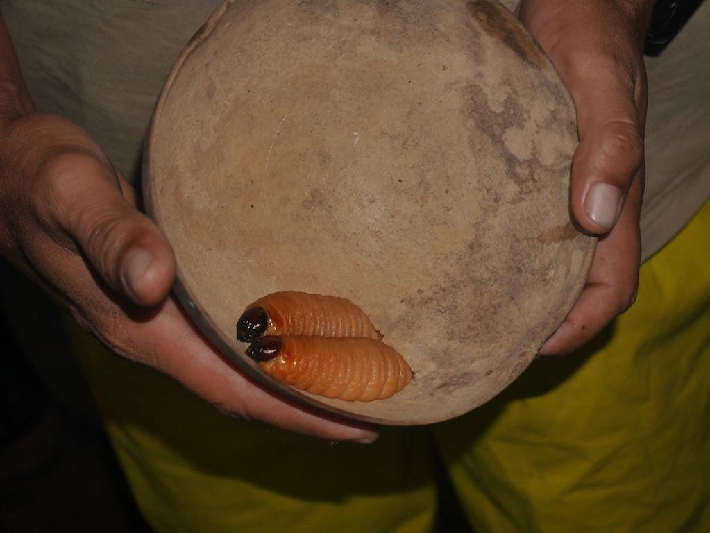 amazonie-communauté