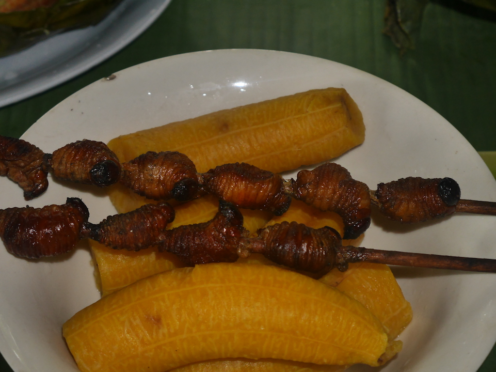 gusano-amazonie