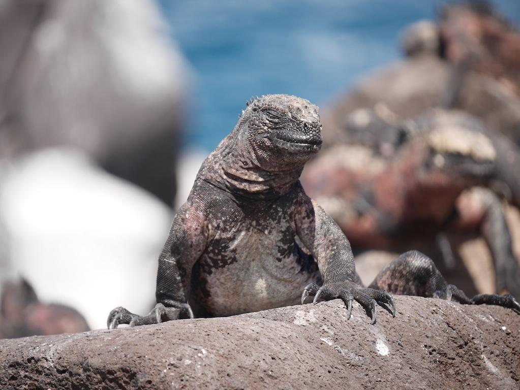 equateur-galapagos-española
