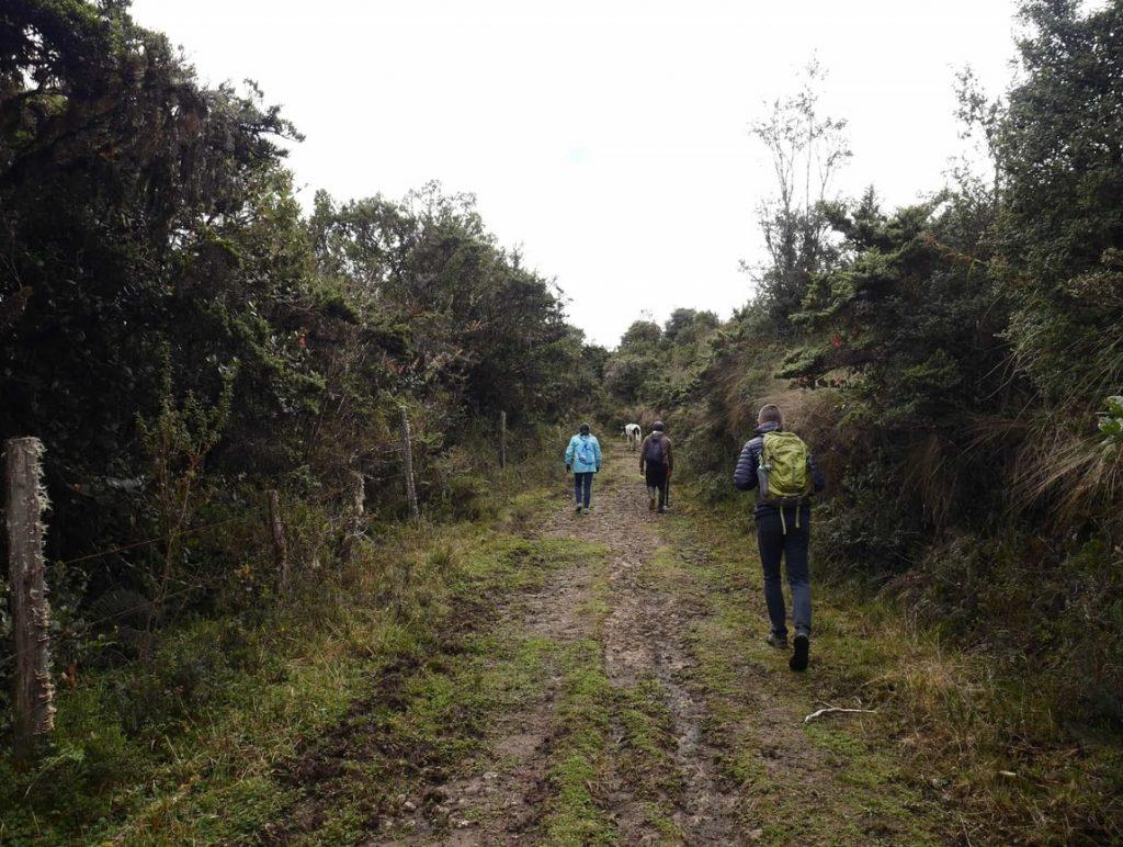 Première partie de la marche, végétation andine