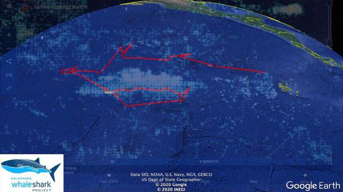archipel Galapagos: requin baleine