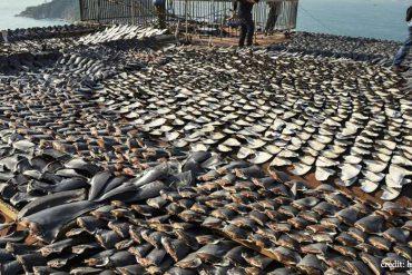 Aux îles Galapagos, 260 bateaux de pêche chinois
