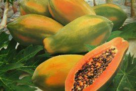 La papaya, l'un des fruits typiques préférés des équatoriens!