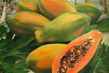 Les fruits et légumes exotiques d'Équateur