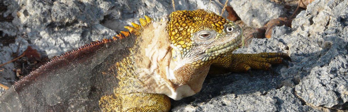Voyage dans les îles Galapagos, faune