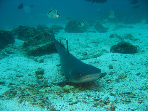 Plongée aux Galapagos durant votre voyage