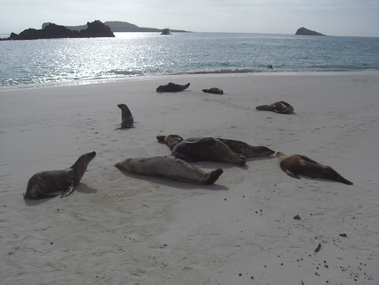 île Española, otaries des Galapagos