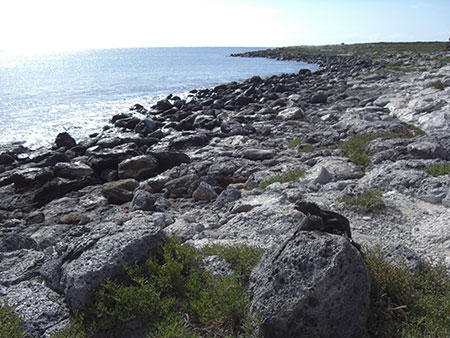 île South Plaza, côte des Galapagos