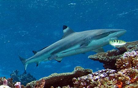Daphne Minor, plongée aux îles Galapagos