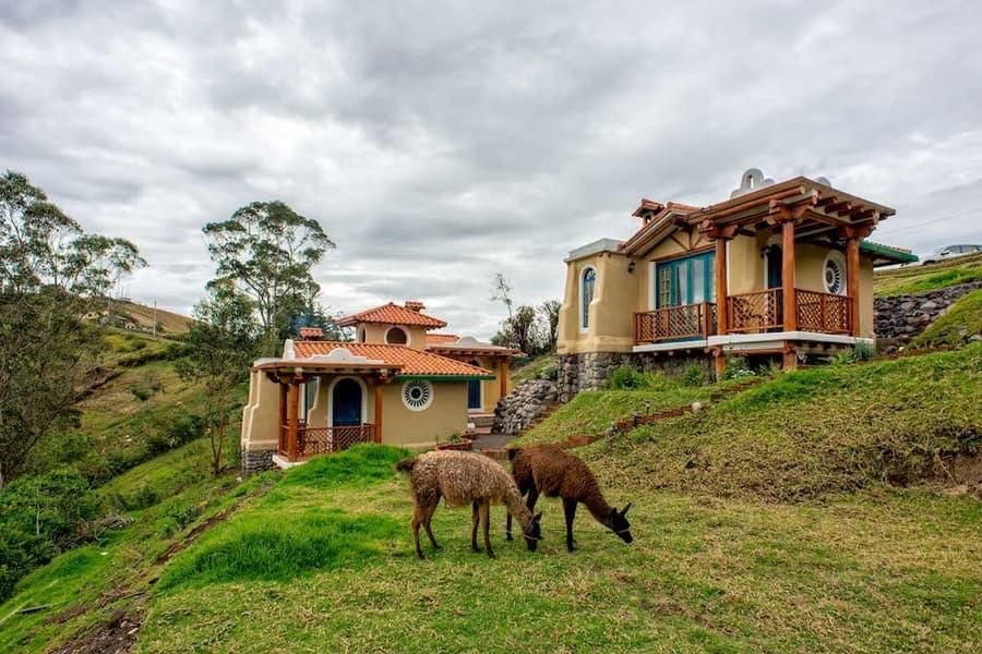 Hôtel Lodge Llullu Llama, Isinlivi près de la lagune Quilotoa, Equateur, lamas et alpahacas