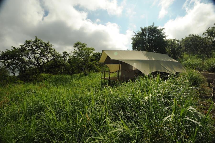 Lodge Safari Camp, Île Santa Cruz, Galapagos, Equateur, tente individuelle