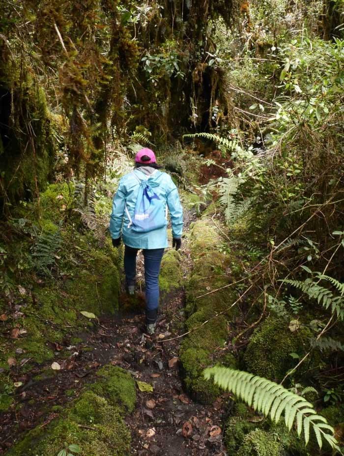 Trek Leito en Equateur: végétation tropicale