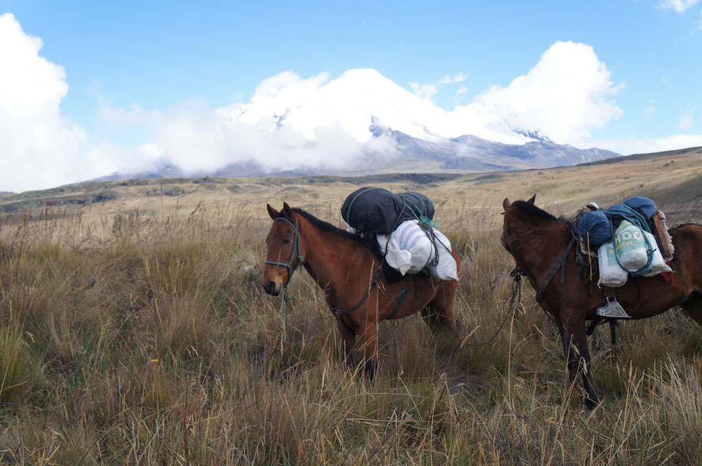 Trekking du Condor en Equateur: mules