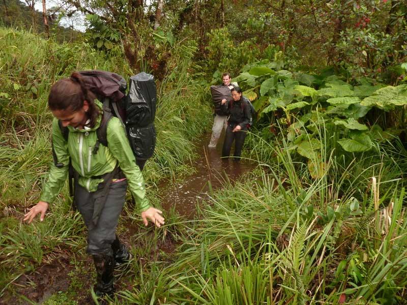 Trekking Lloa-Mindo en Equateur: marécage