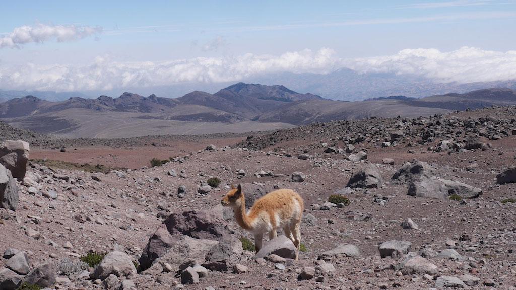 Trek des Vigognes en Equateur: paysages