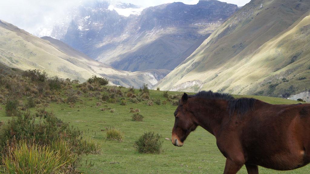 Trek Altar en Equateur: cheval