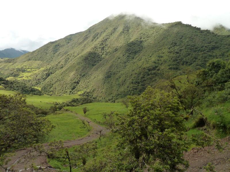 Trek Lloa-Mindo en Equateur: forêt