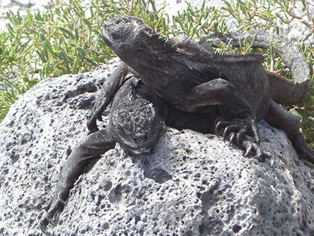 Cap Douglas, plongée aux îles Galapagos