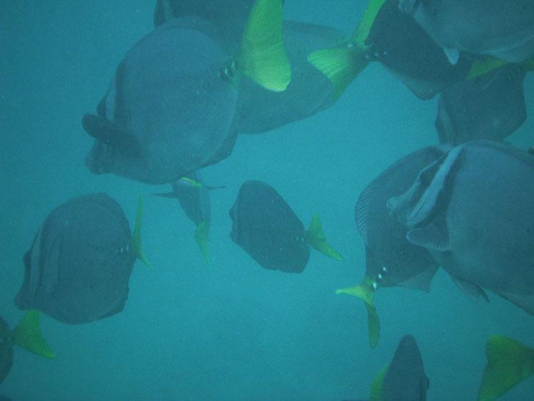 Cousin's Rock, croisière plongée aux Galapagos: poissons