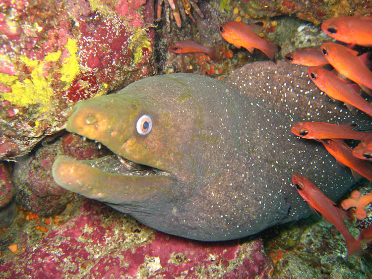 Daphne Menor, croisière plongée aux Galapagos: muraine