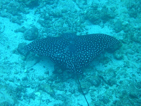 île Seymour, plongée aux îles Galapagos