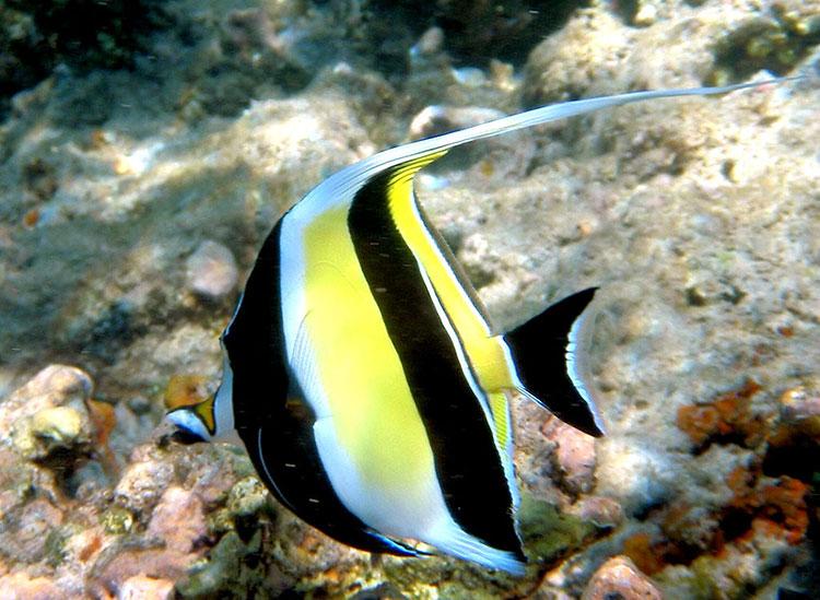 l'île Seymour, croisière plongée aux Galapagos: poisson