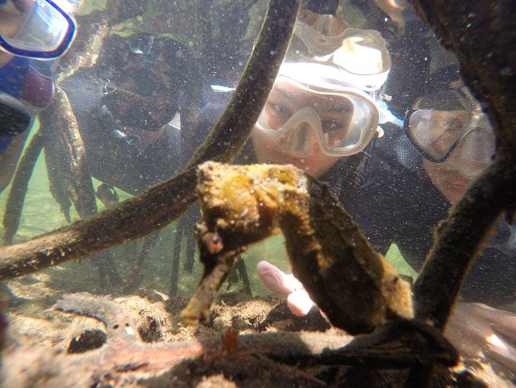 Tijeretas Hill, croisière plongée aux Galapagos: hippocampe