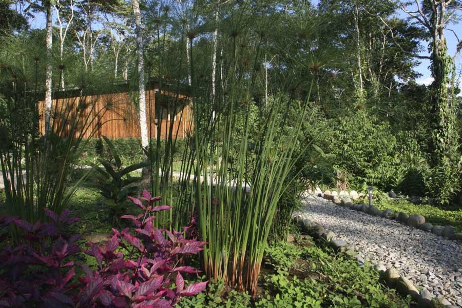 Hamadryade Lodge, Equateur, jardin
