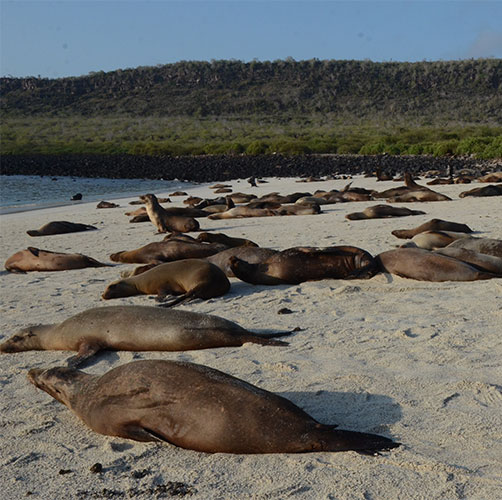 Circuit aux îles Galapagos