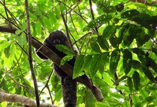 L'Amazonie d'Équateur