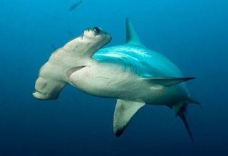 Croisière plongée aux îles Galapagos